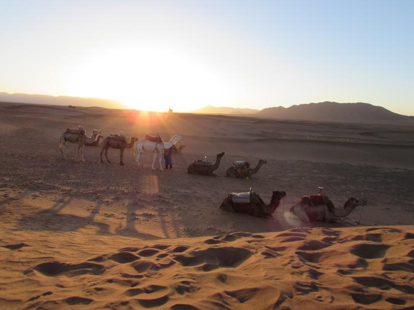 Sunrise in the SaharaDesert